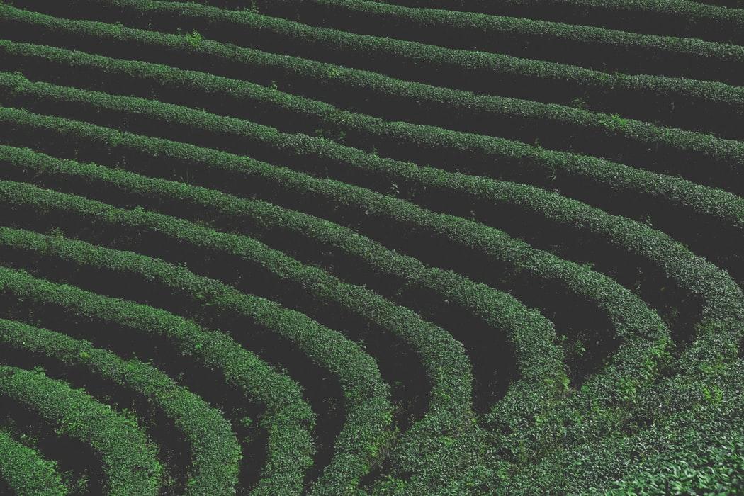 台灣觀光巴士半日遊 <strong>千島湖、坪林自然美景</strong> <strong>茶飄香</strong> <strong>Thousand Island Lake & Pinglin Tea Plantation</strong>