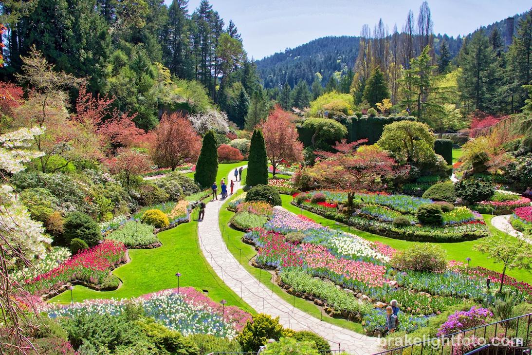 2021年冬季溫哥華洛磯山經典七日或八日遊 維多利亞一日遊 (參加七天團團友今日下午送機返回原居地)