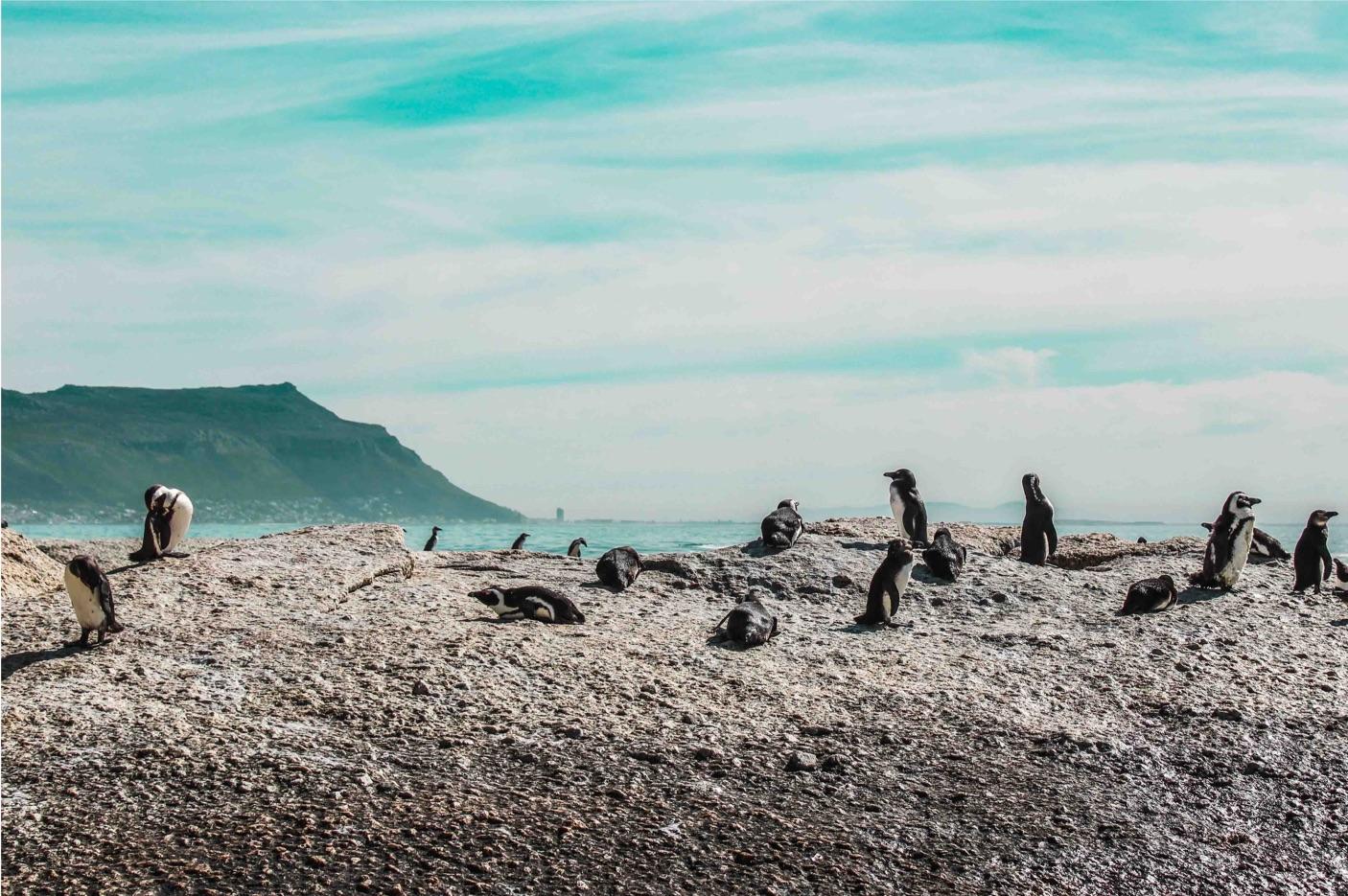 2022年 2/23 南非豪華9日遊 豪特灣Hout Bay & 海豹島Seal Island—查普曼大道Chapman Street &  企鵝灘African Penguin—好望角Cape of Good Hope