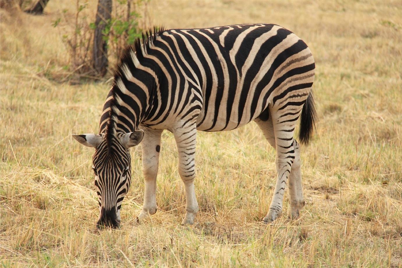 2022年 2/23 南非豪華9日遊 匹林斯堡國家動物園Pilanesberg National Park—普利托利亞—約翰尼斯堡