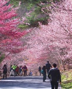 【2019武陵觀光巴士】山中奇緣‧武陵農場2日